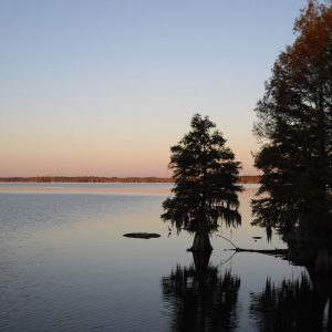 A cypress tree at Lake Marion, South Carolina